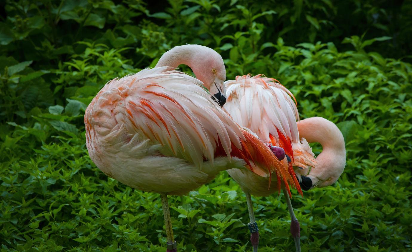 Nejhezčí pták v Plzni