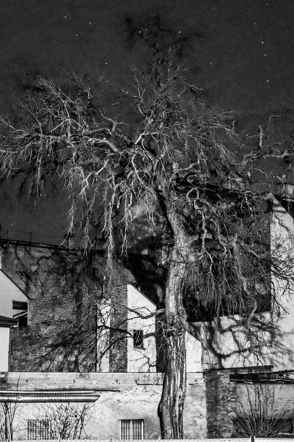 Strom & domy & Libeň
