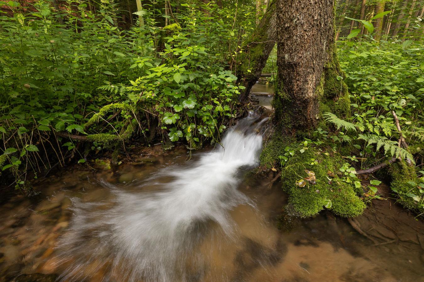 Nekořský potok
