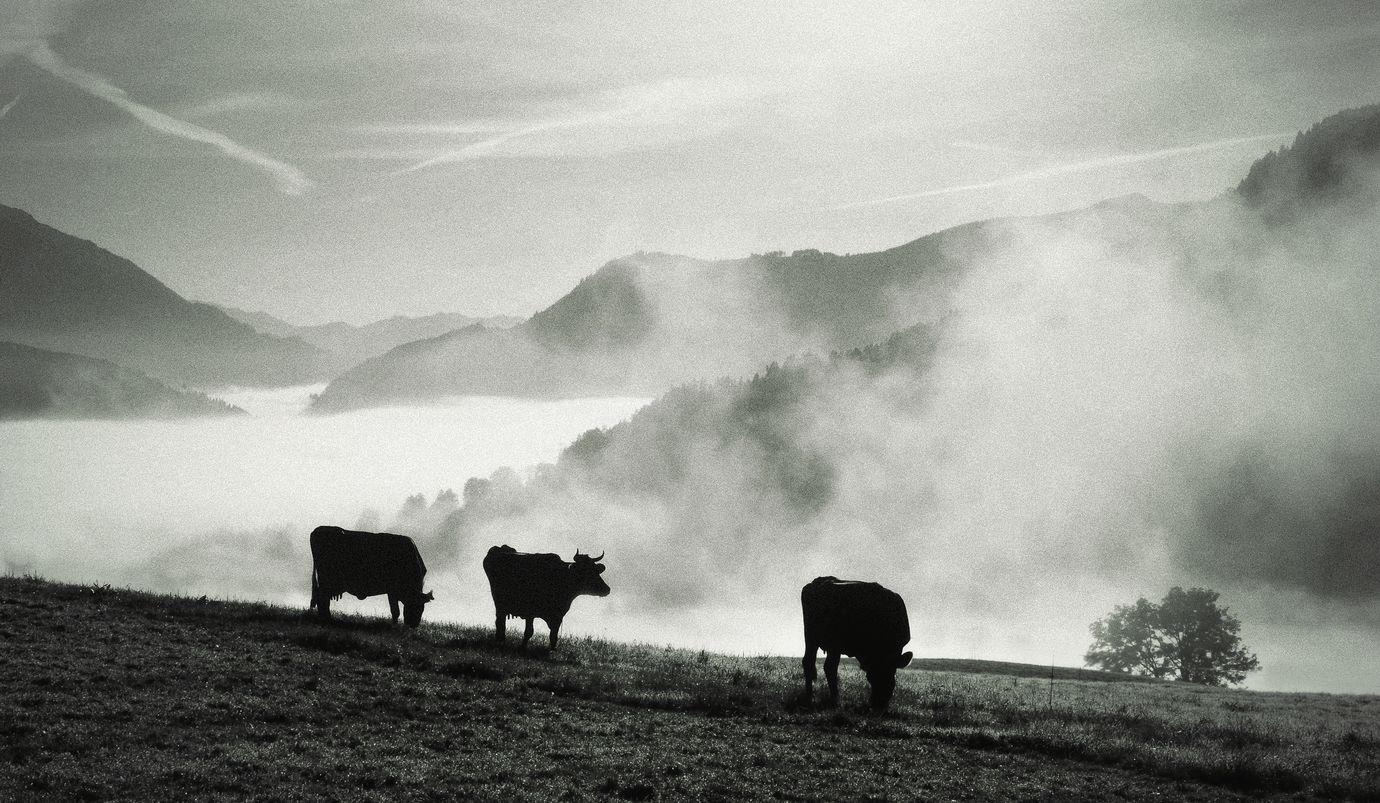 Goryly v mlze