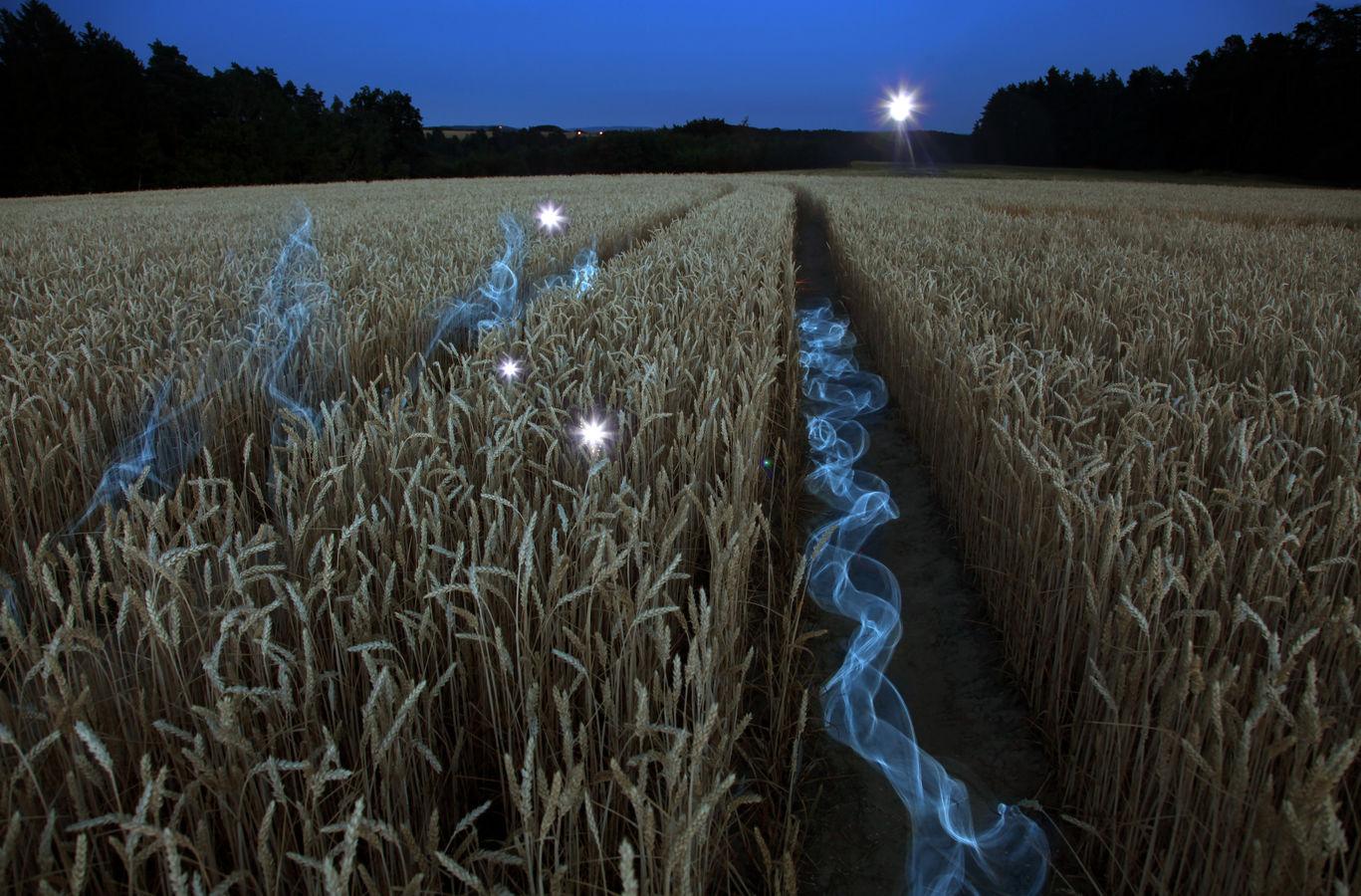 Duchové v pšenici