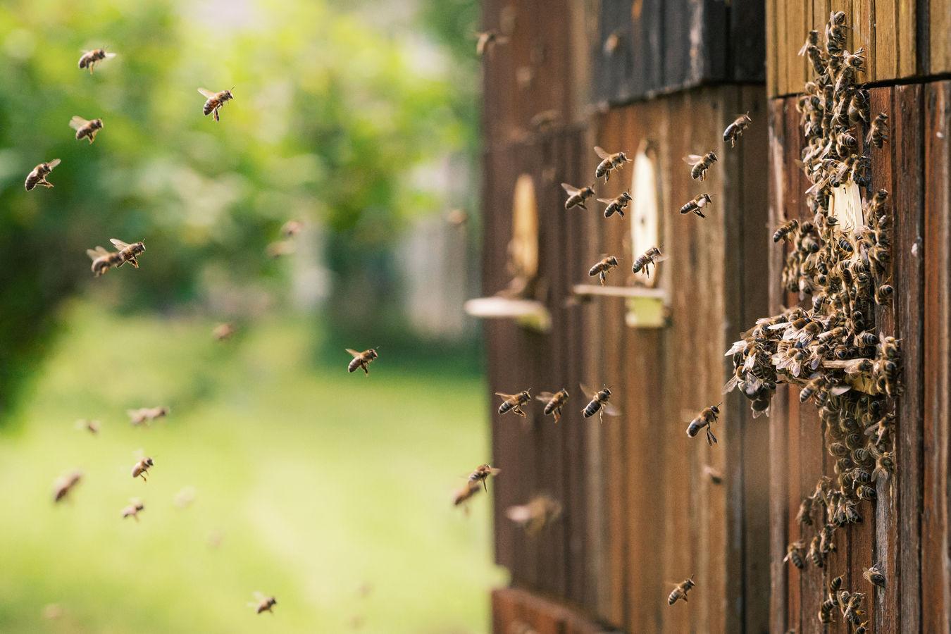 Pilné včely