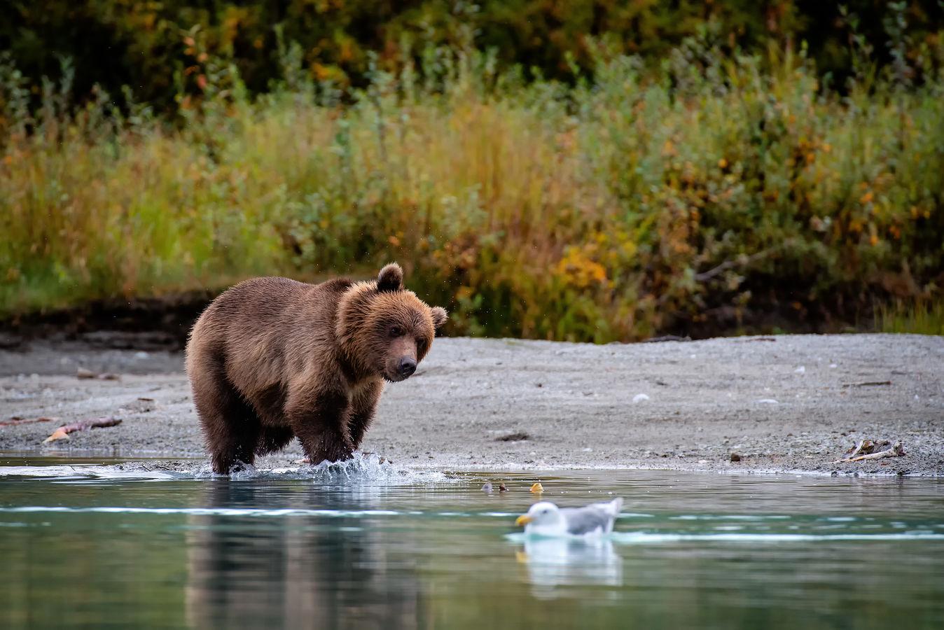 Zvědavý medvěd