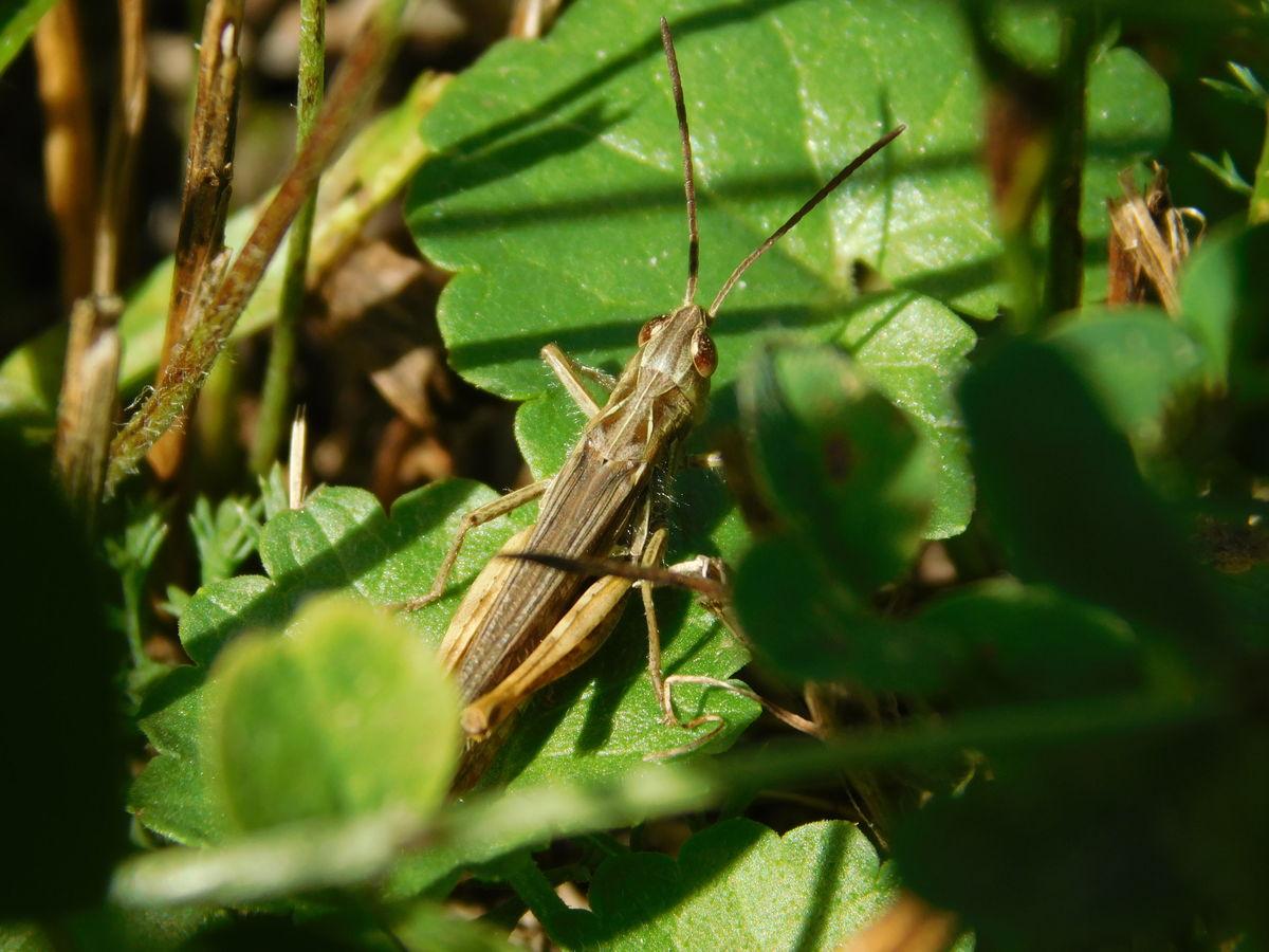 Na lovu v trávě