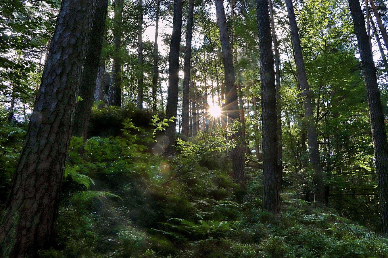 ...ranní ticho na Zlaté stezce....