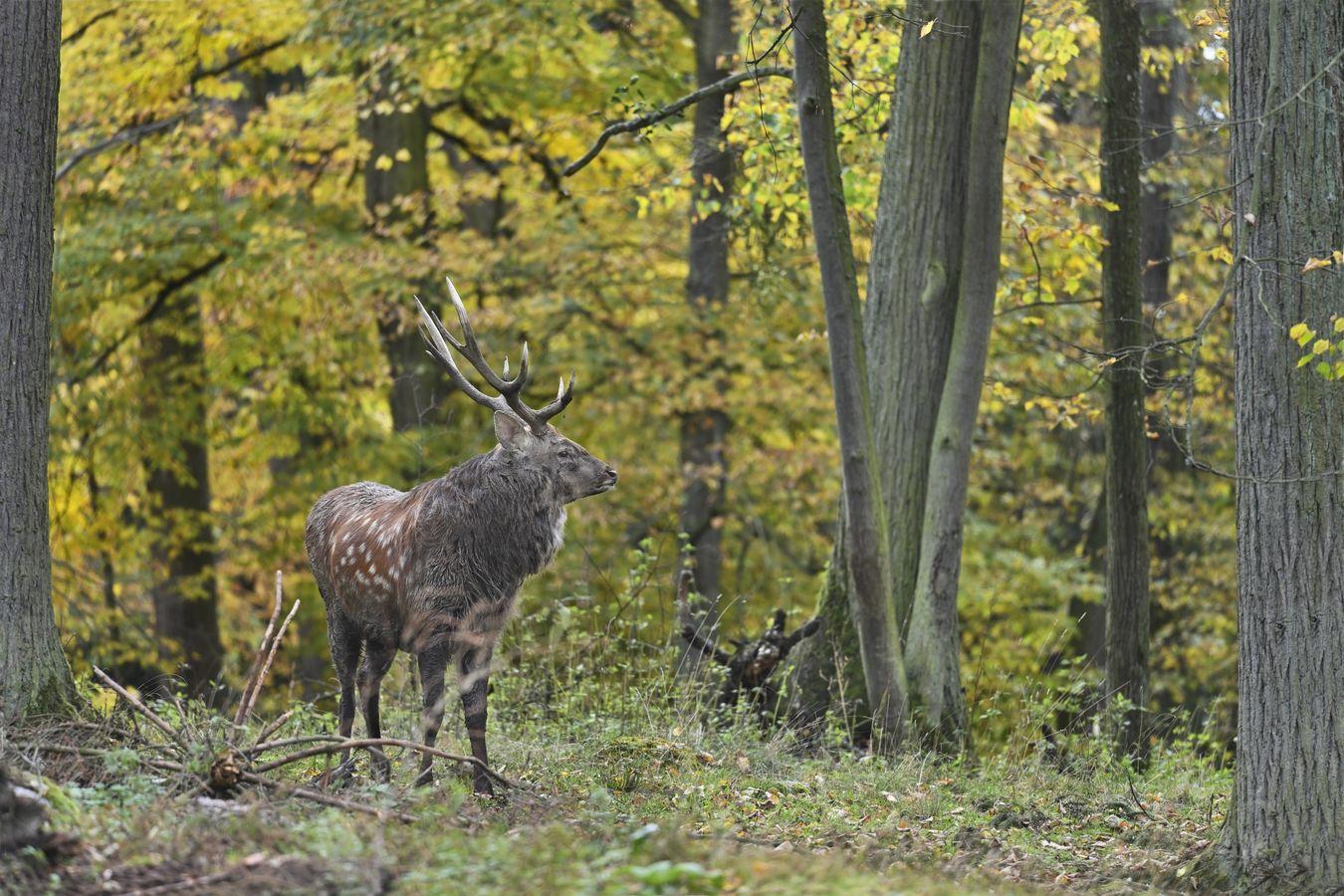 obrázky z podzimního lesa (2)