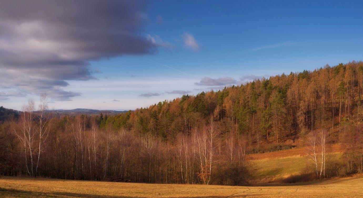 Břízy a okraj smíšeného lesa