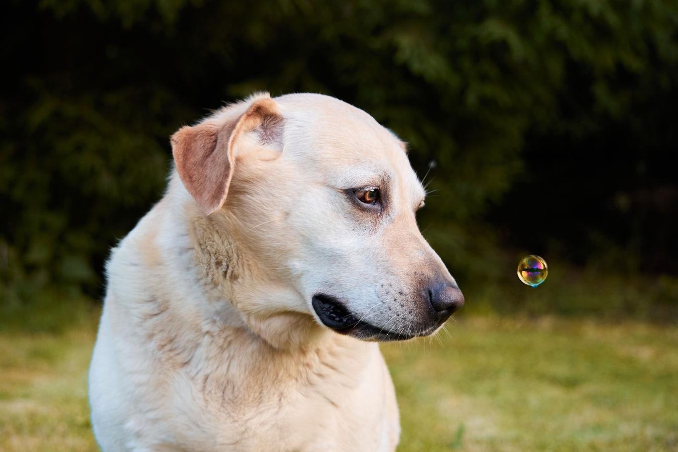 """""""Podívej, bublina!"""""""