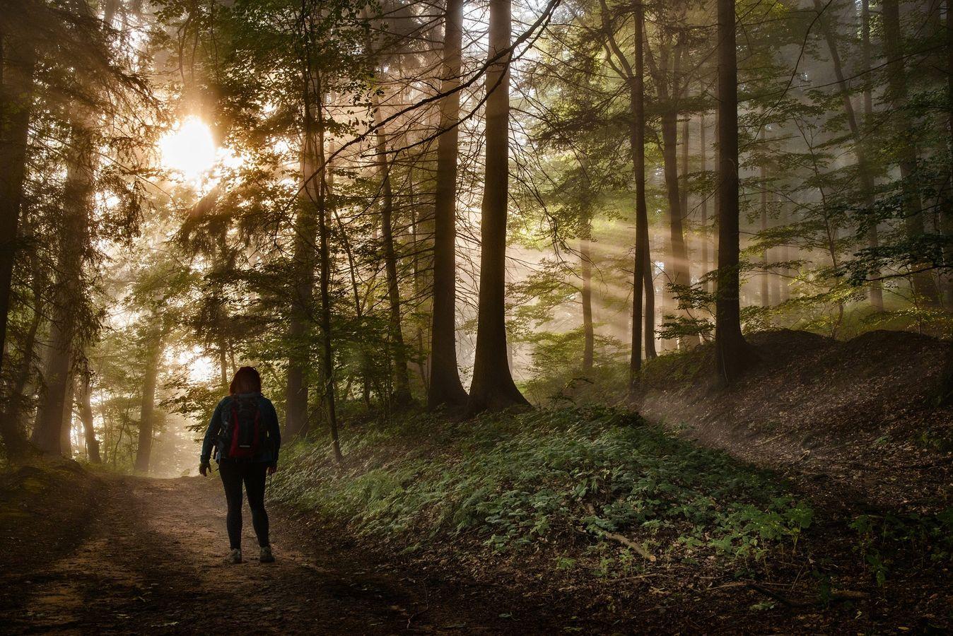 Svítání v lese