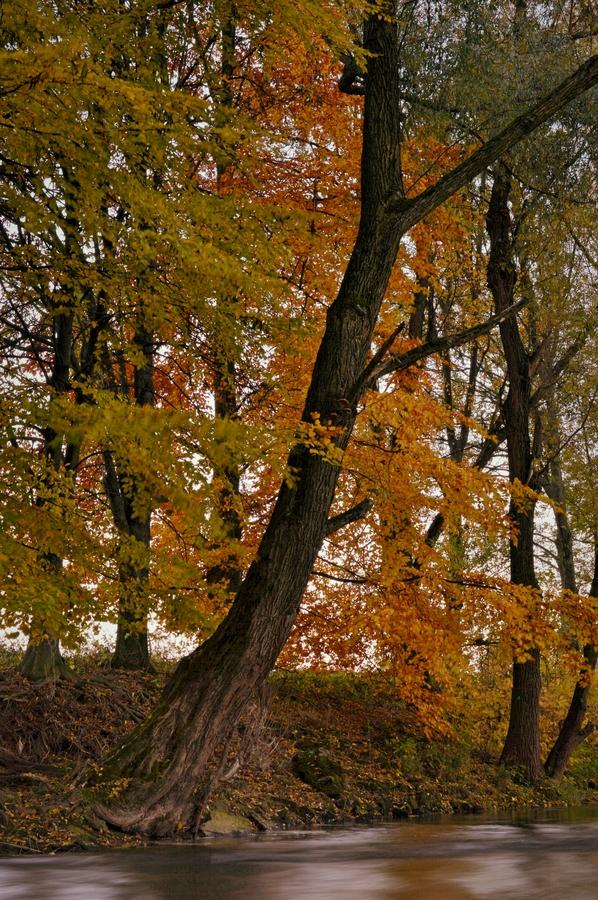 Podzimní Labe