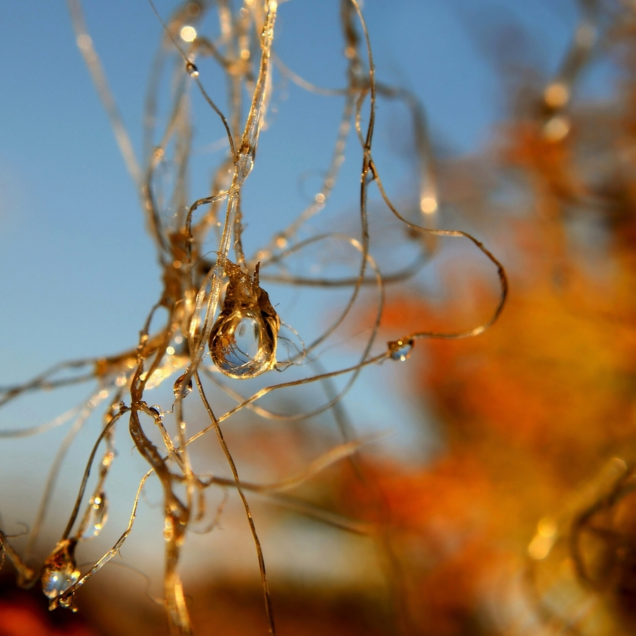 Slzičky podzimu