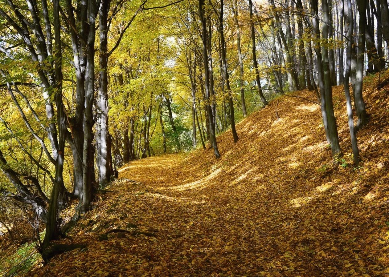 Po koberci podzimu