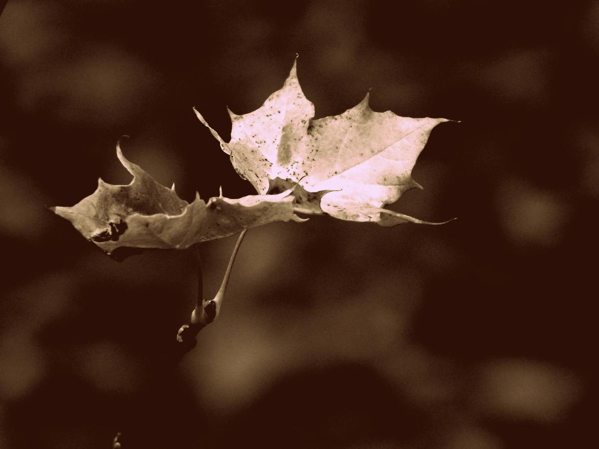 konec podzimu