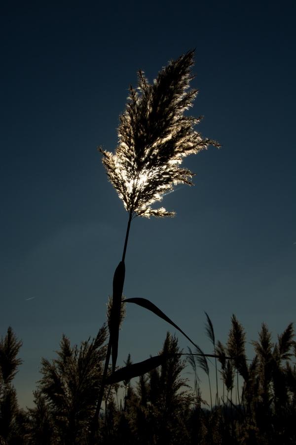 Luční lucerna
