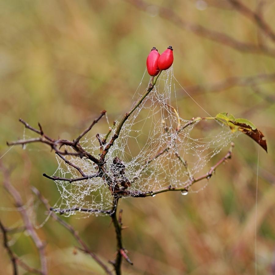 Z jesenných ozdôb