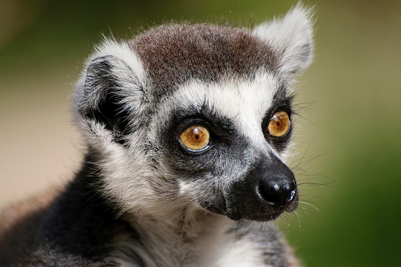 Návštěvník z Madagaskaru