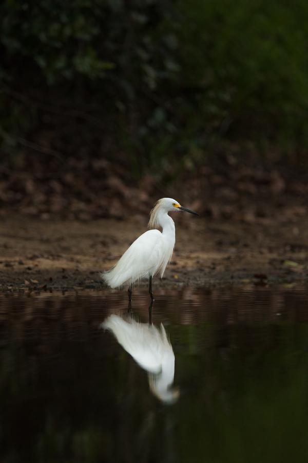 Bílá kráska v zrcadle