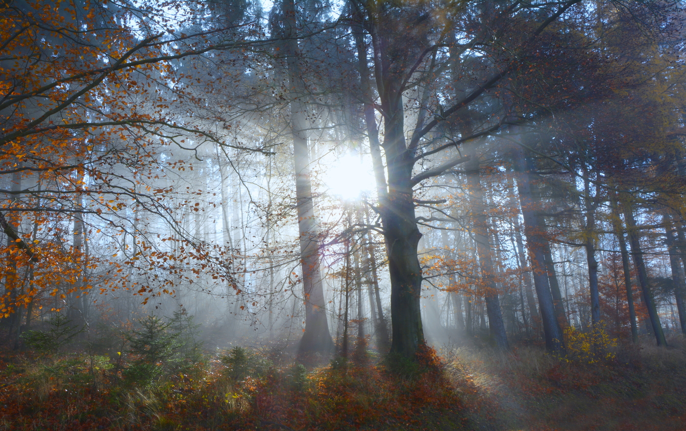 mezi stromy......