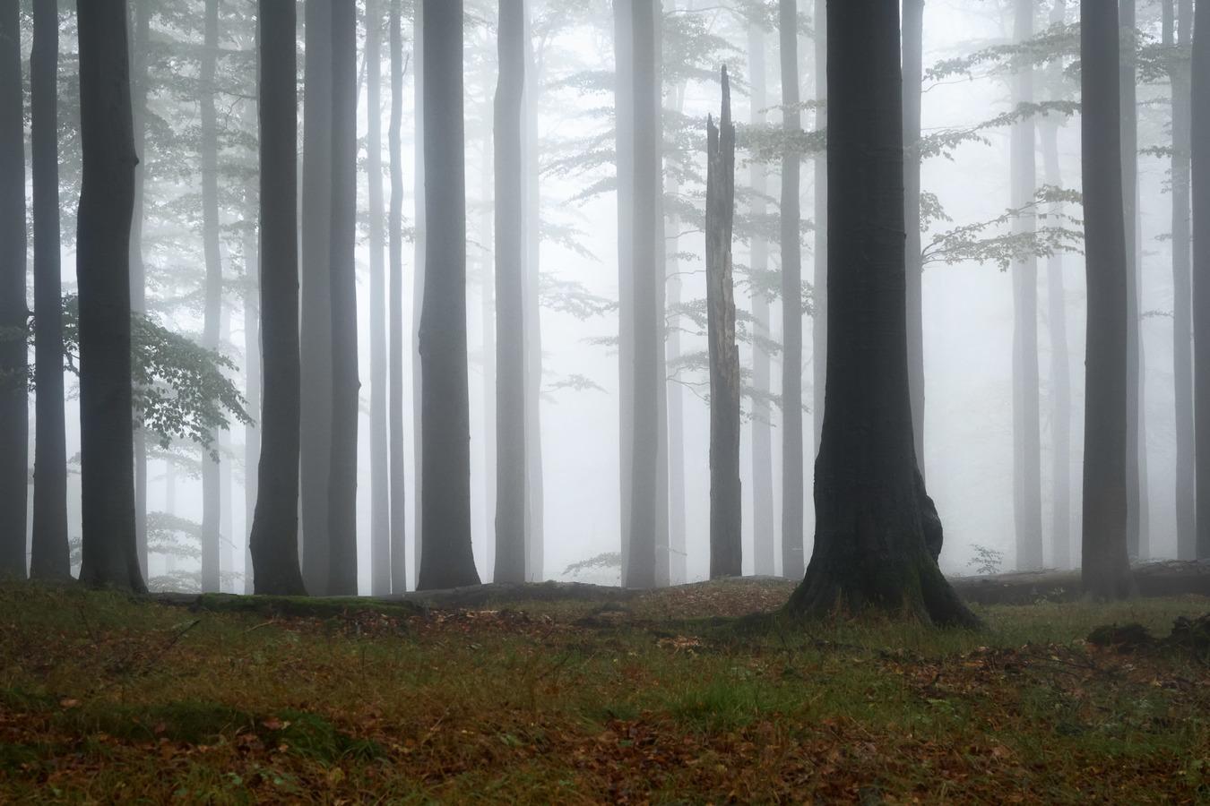 Jizerské mlhy
