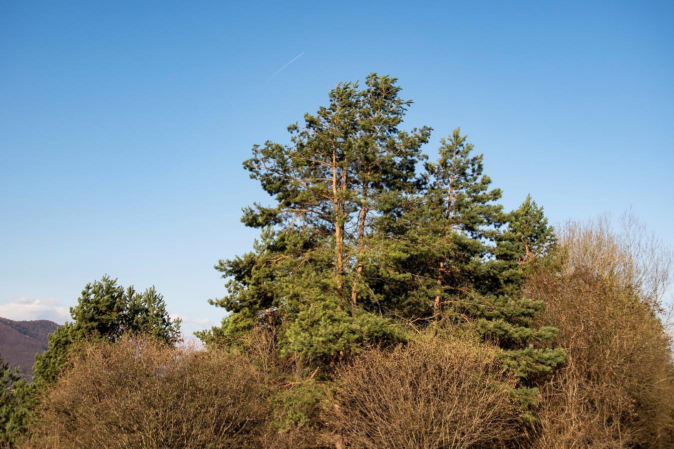 Strom vo vetre