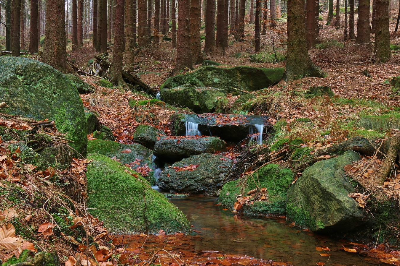 Les plný potůčků s mini vodopády.