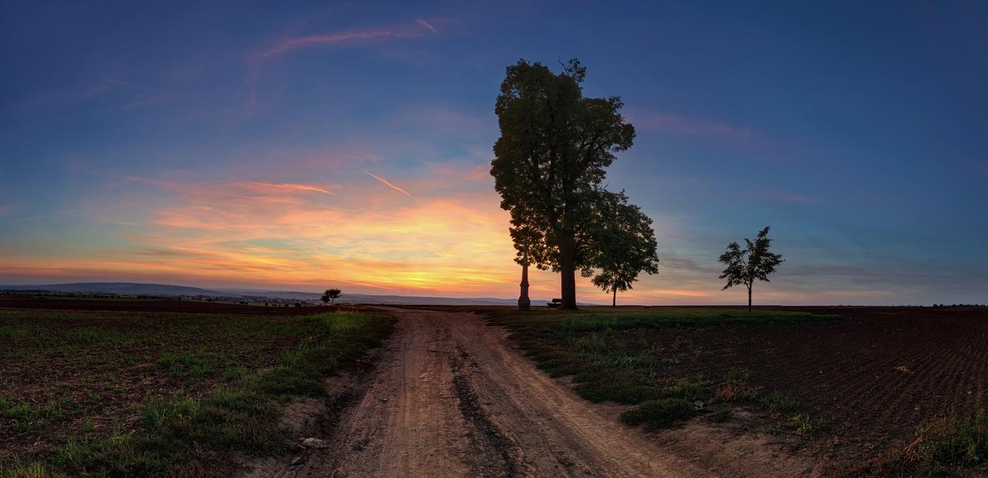 Cesta kolem starého stromu