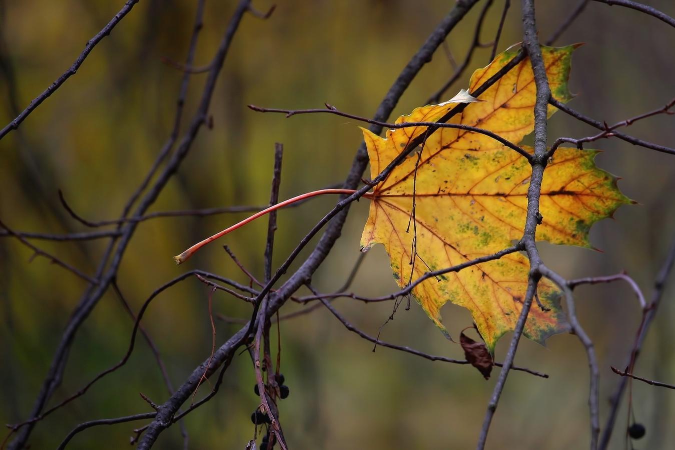 Podzimní....