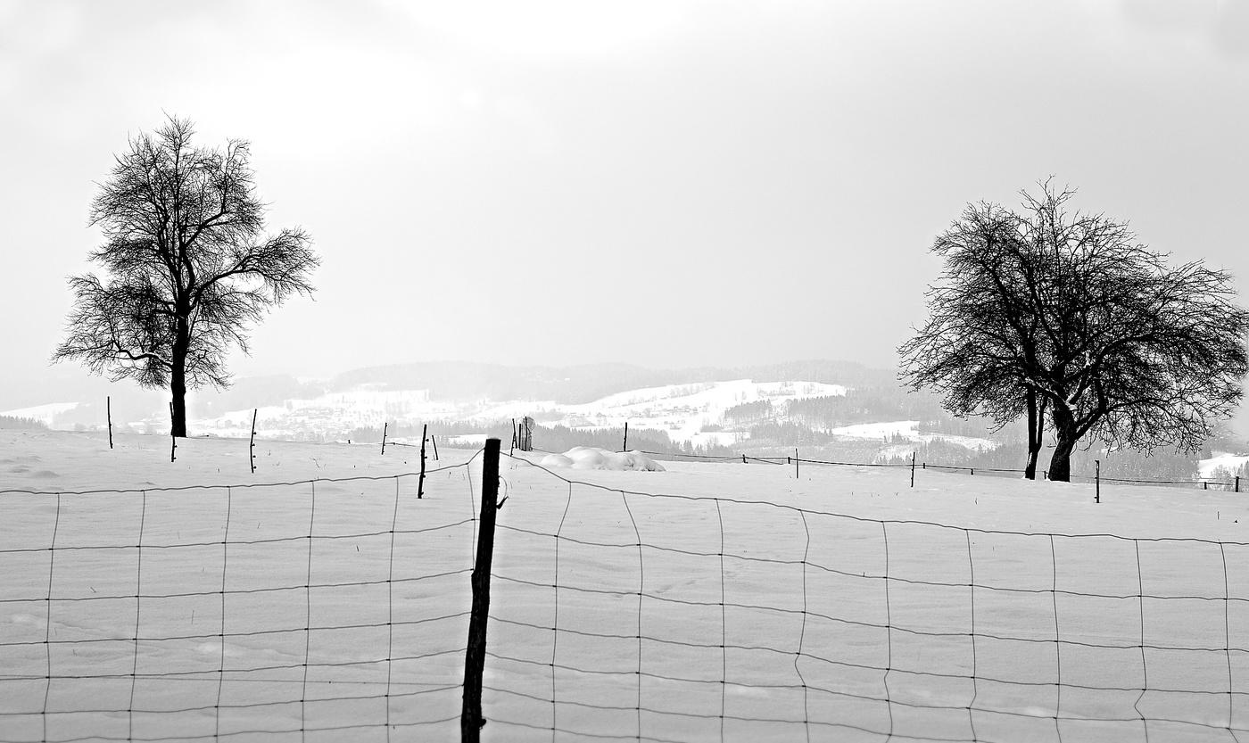 ...za plotem......
