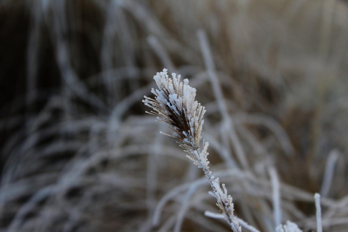 Osamělá rostlinka po chladné zimní noci
