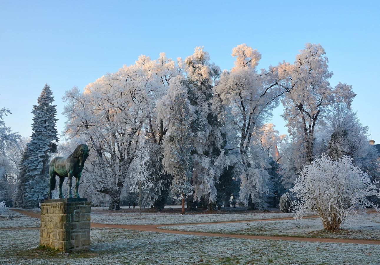 námraza v zámecké zahradě  ve Slatiňanech II