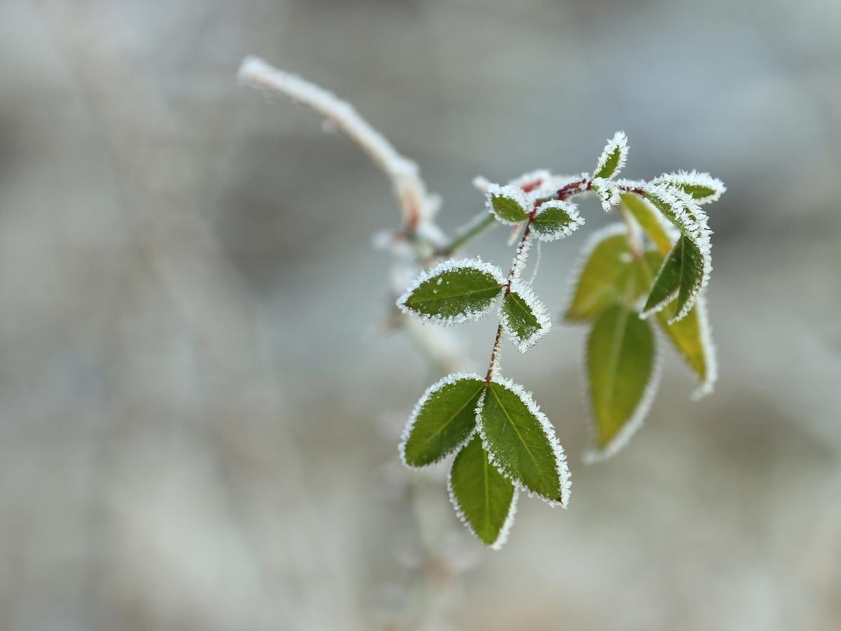 Zimě navzdory