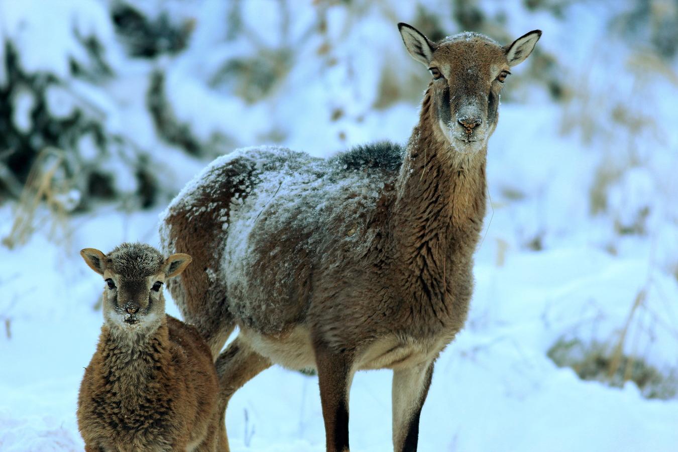 Mimino v zimě