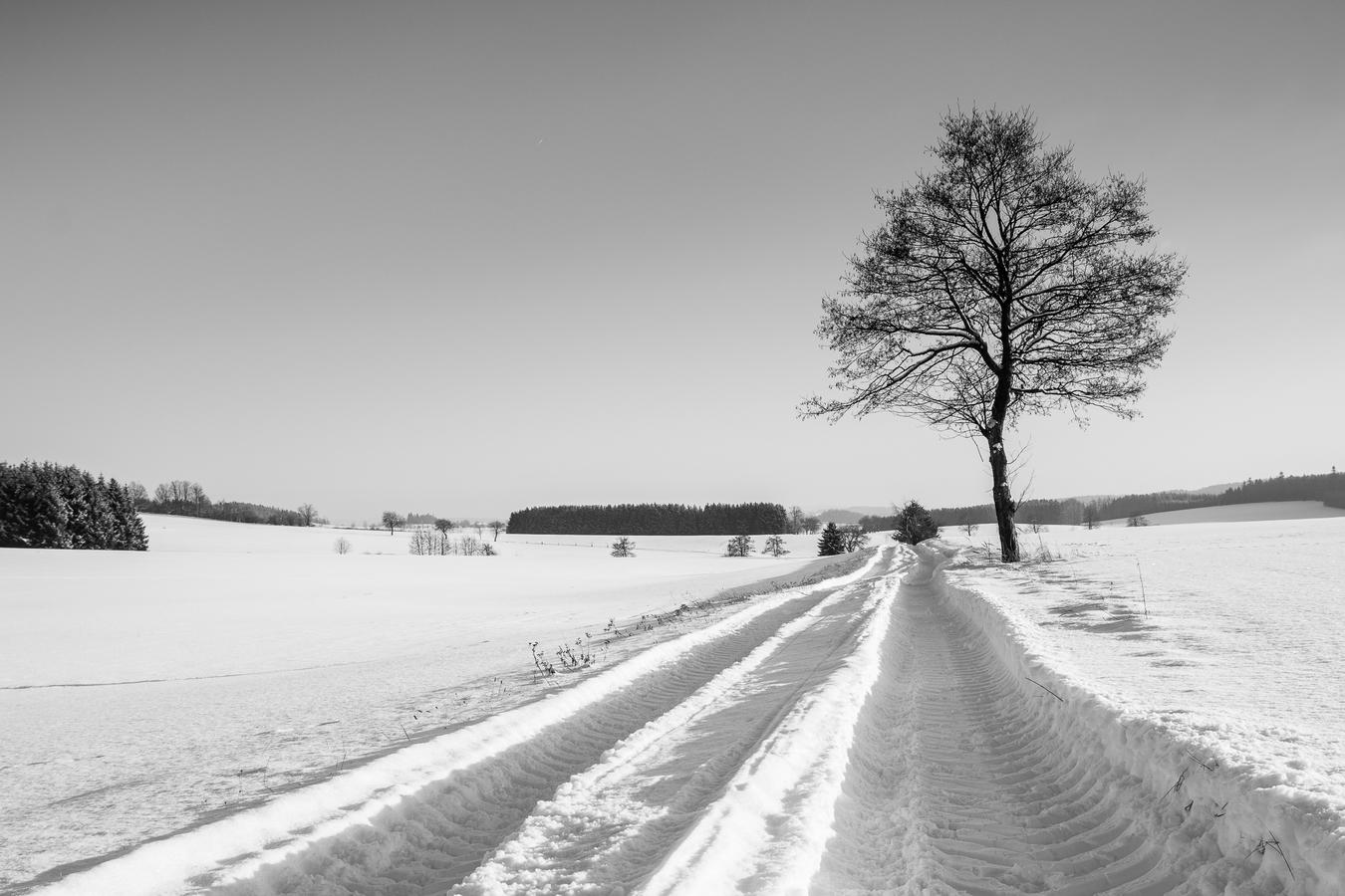 Zimní koleje