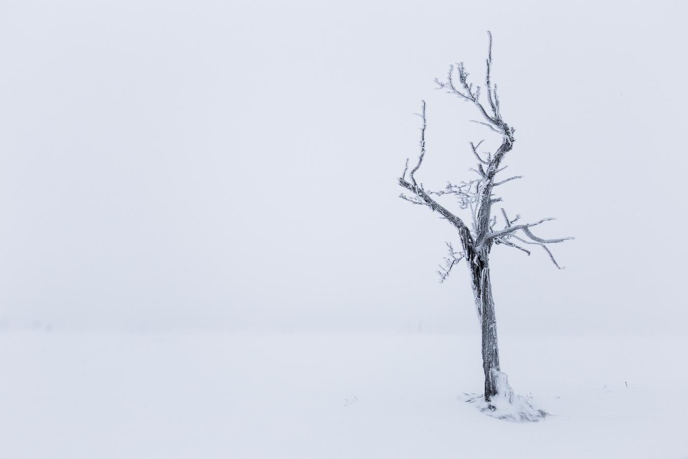 Vichřice v Krušných horách