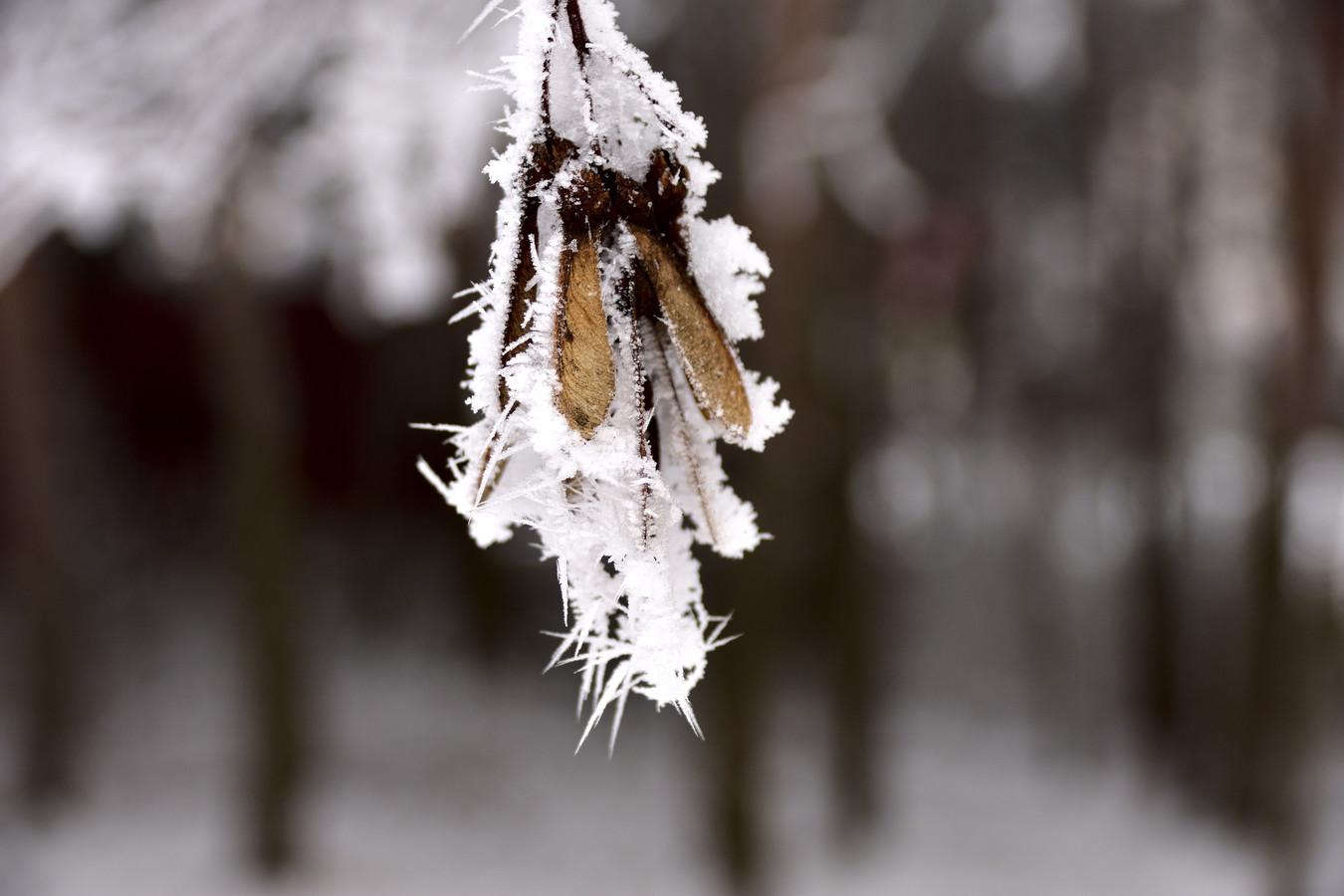 Zamrzlé dvounožky
