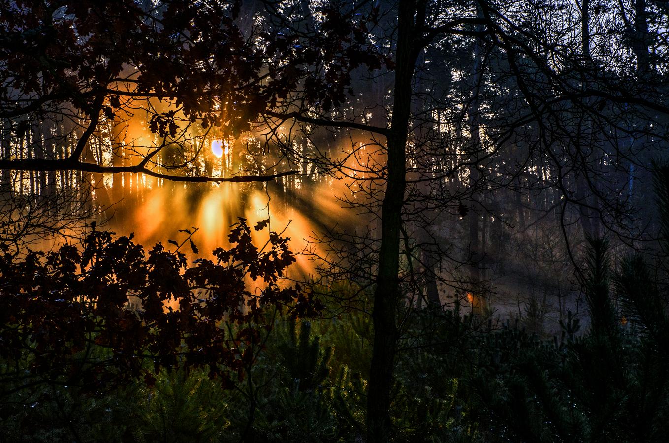 V tajemném lese