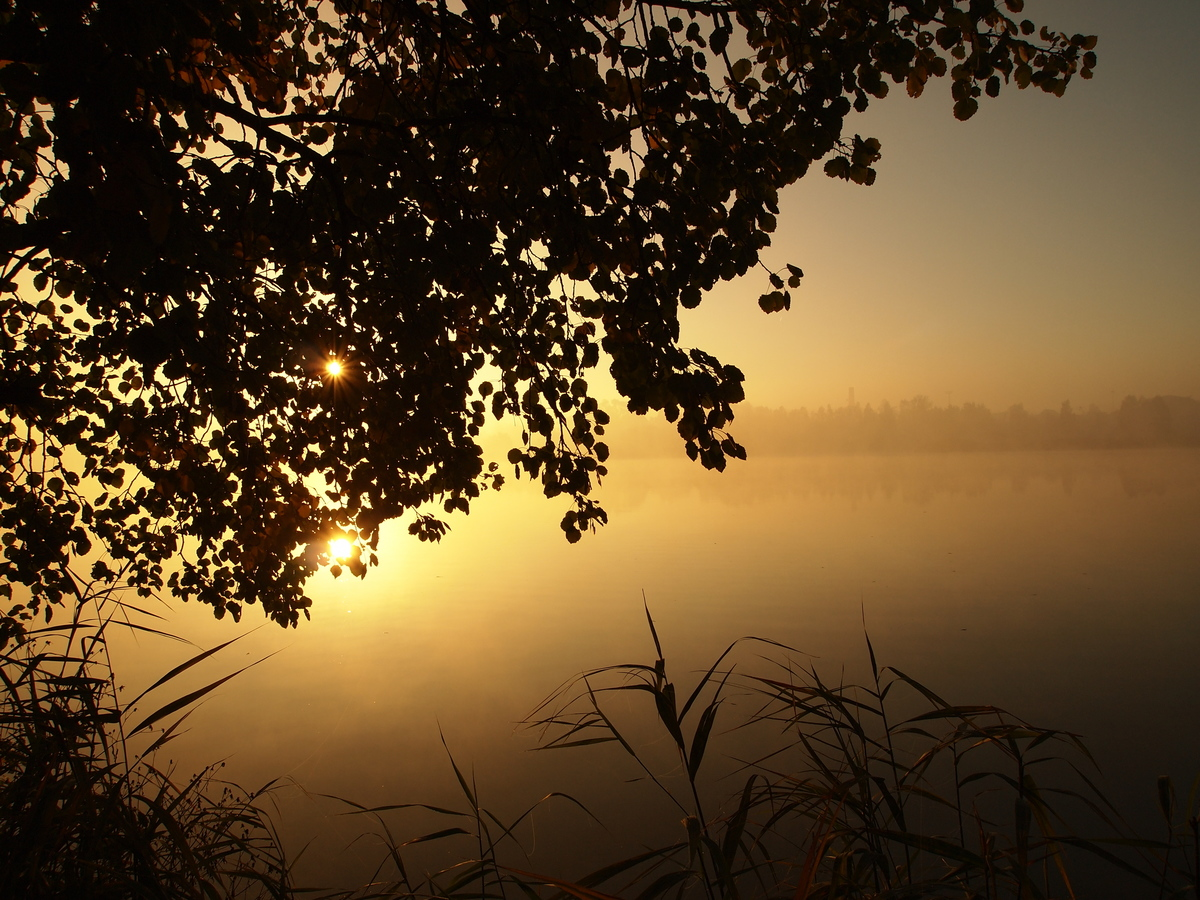 Mlžné ráno nad rybníkem