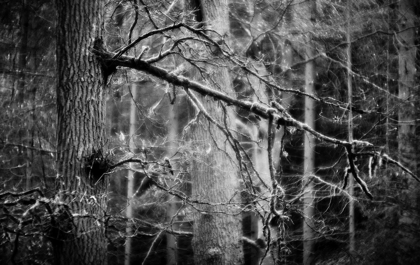 Starý les