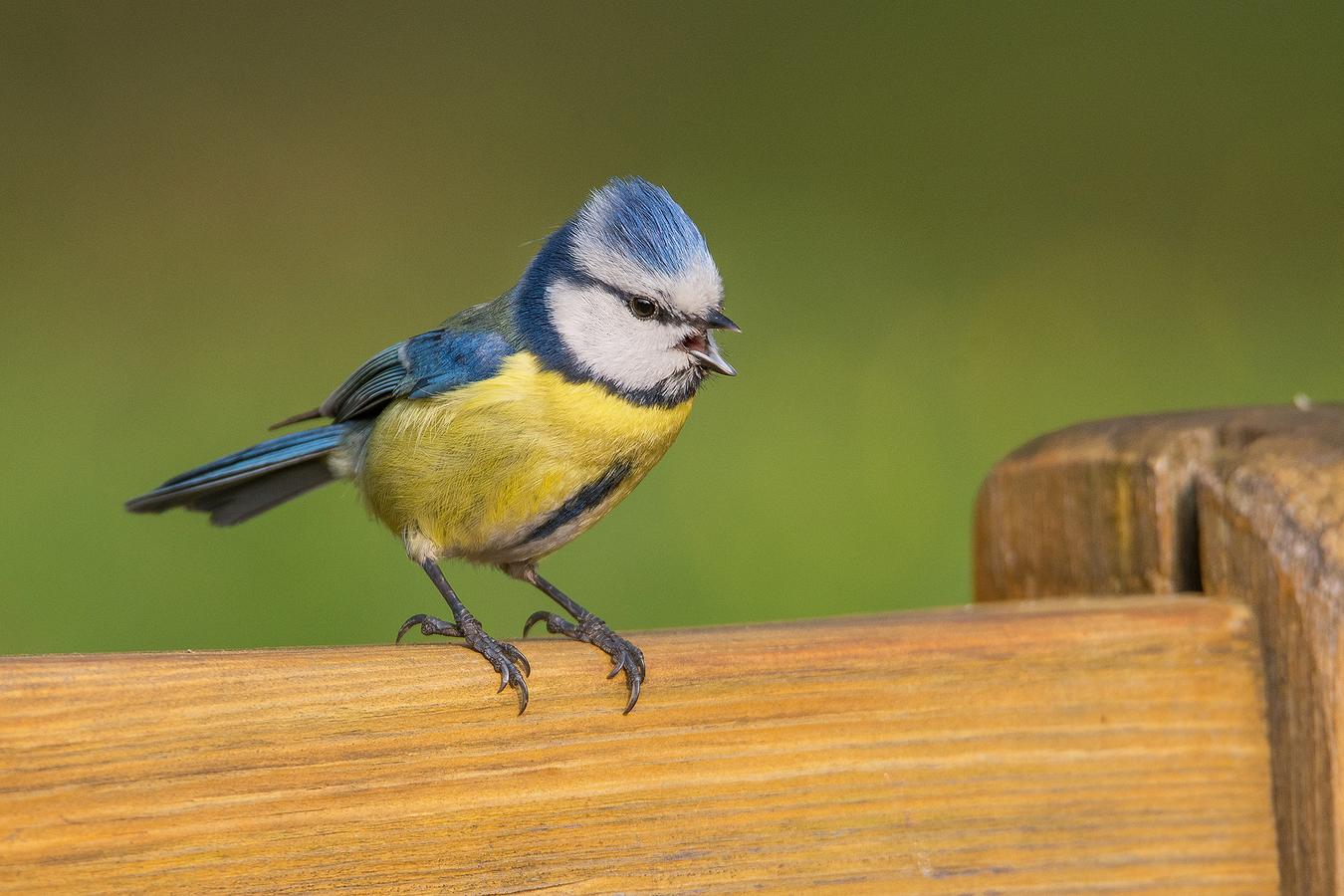 ,, Na lavičce ve Stromovce seděla ...