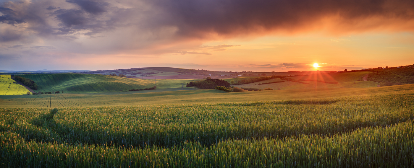 Moravské plantáže