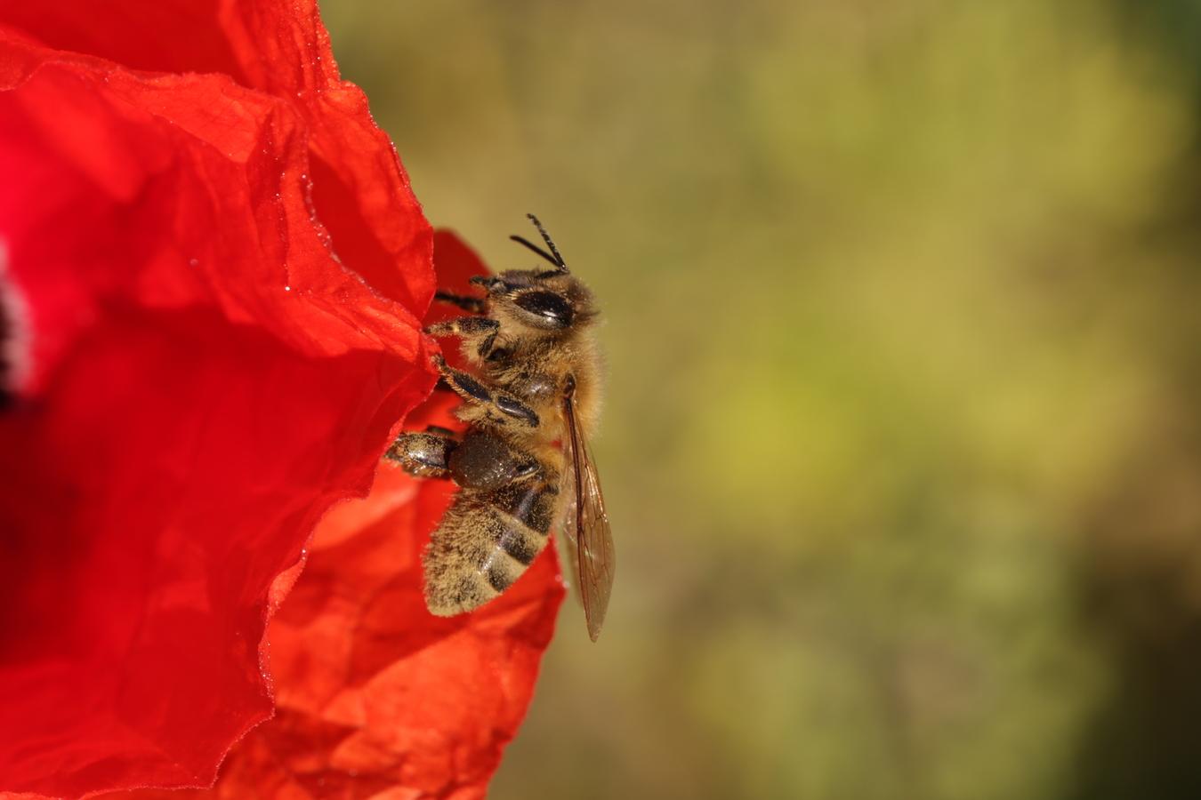včelí odpočinek