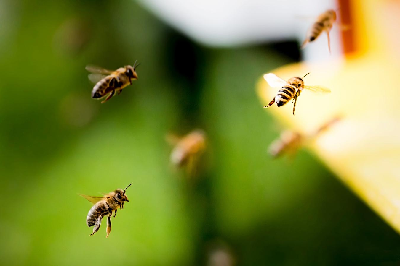 Návrat do úlu