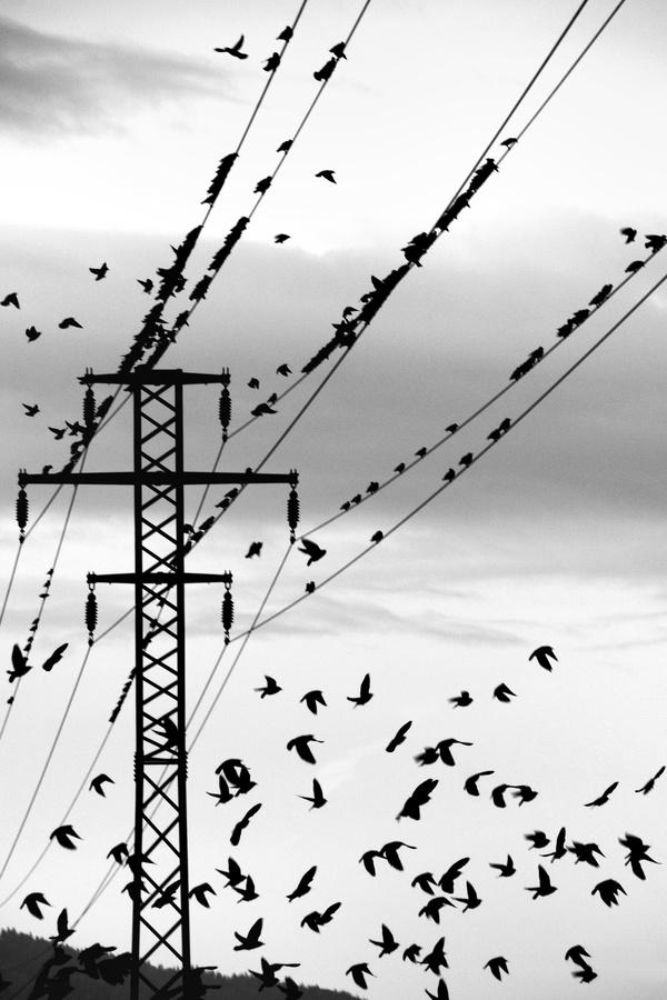 padajúci vtáci