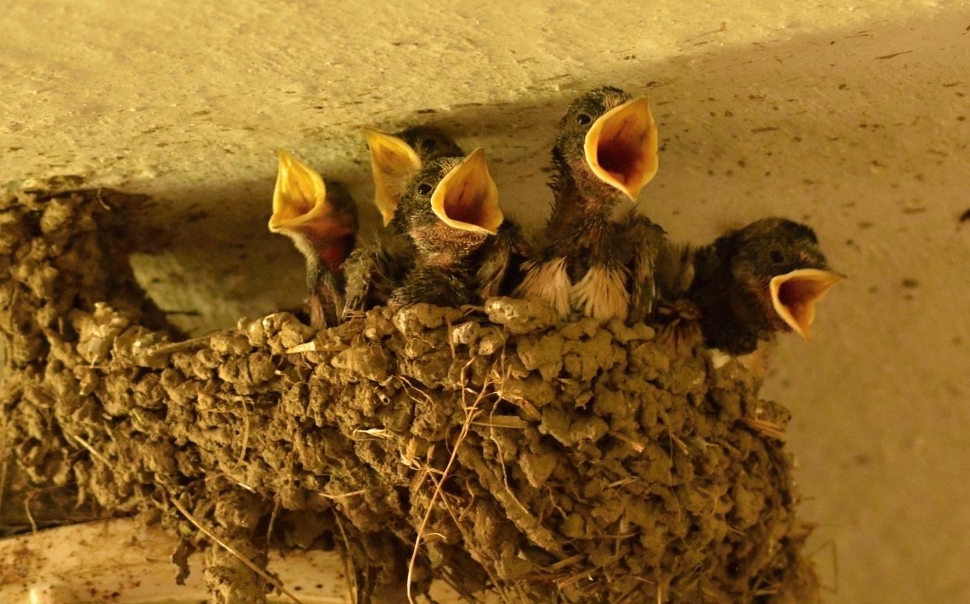 Ptačí koncert
