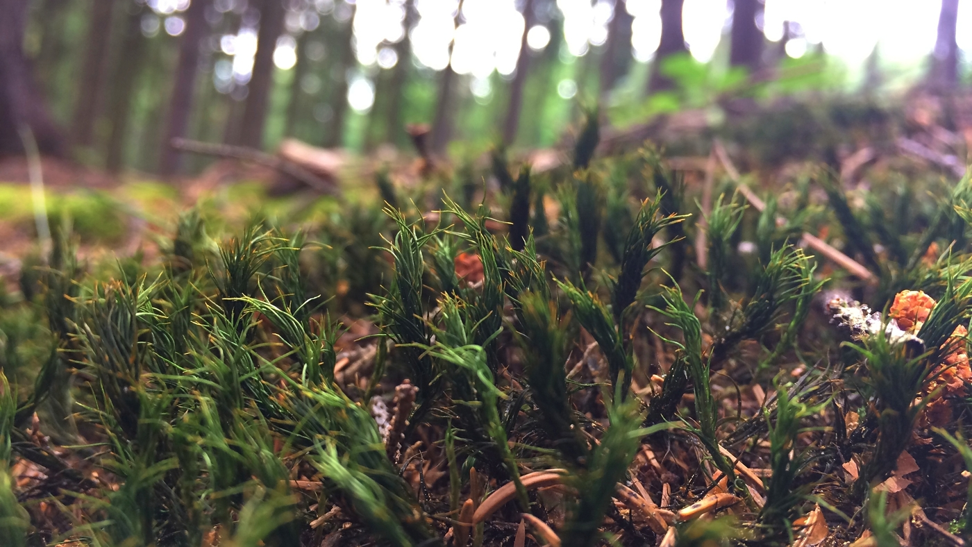 Také něco z lesa