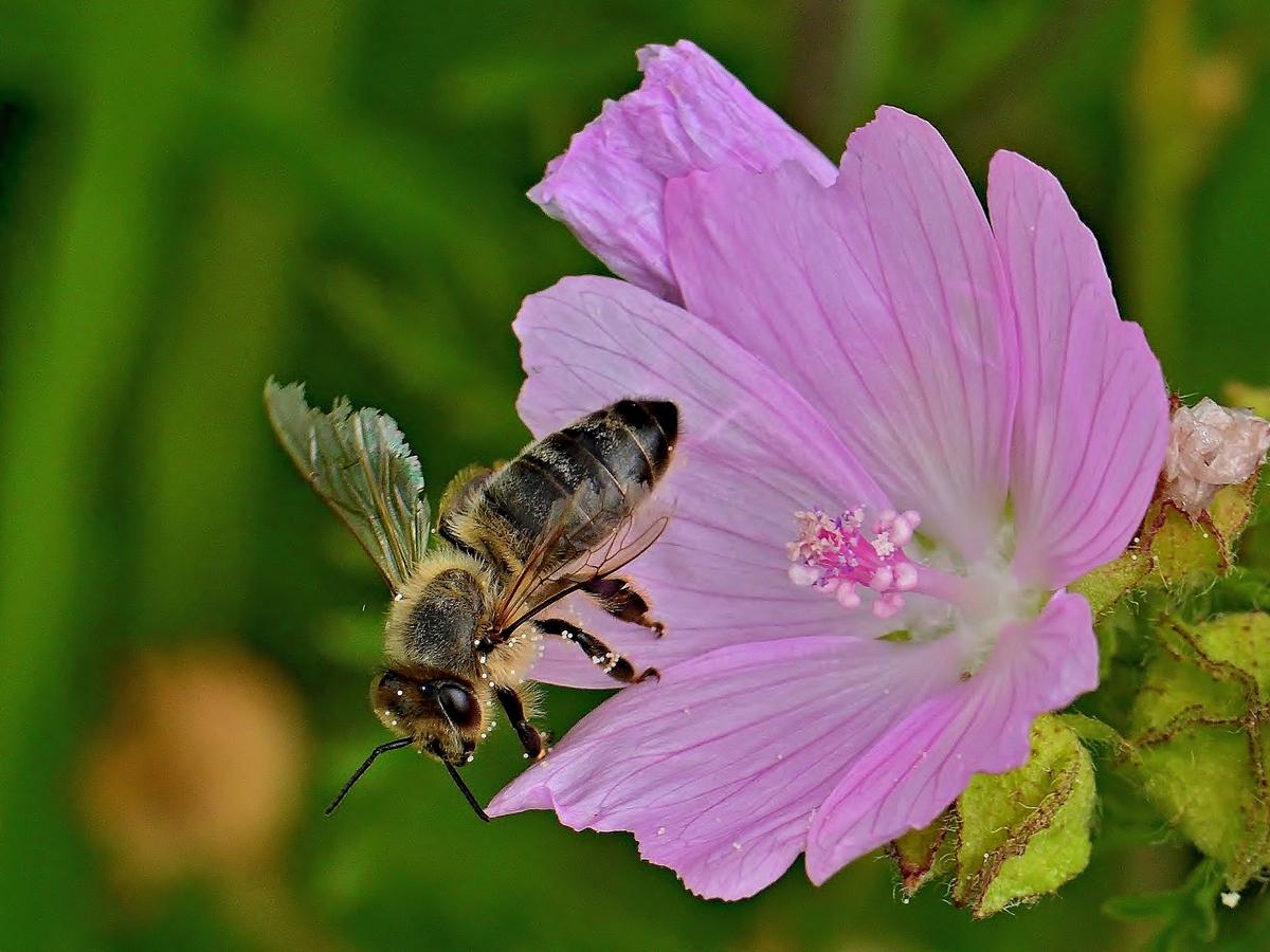 Zrníčka pylu
