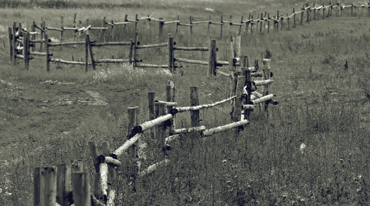 Podle plotu