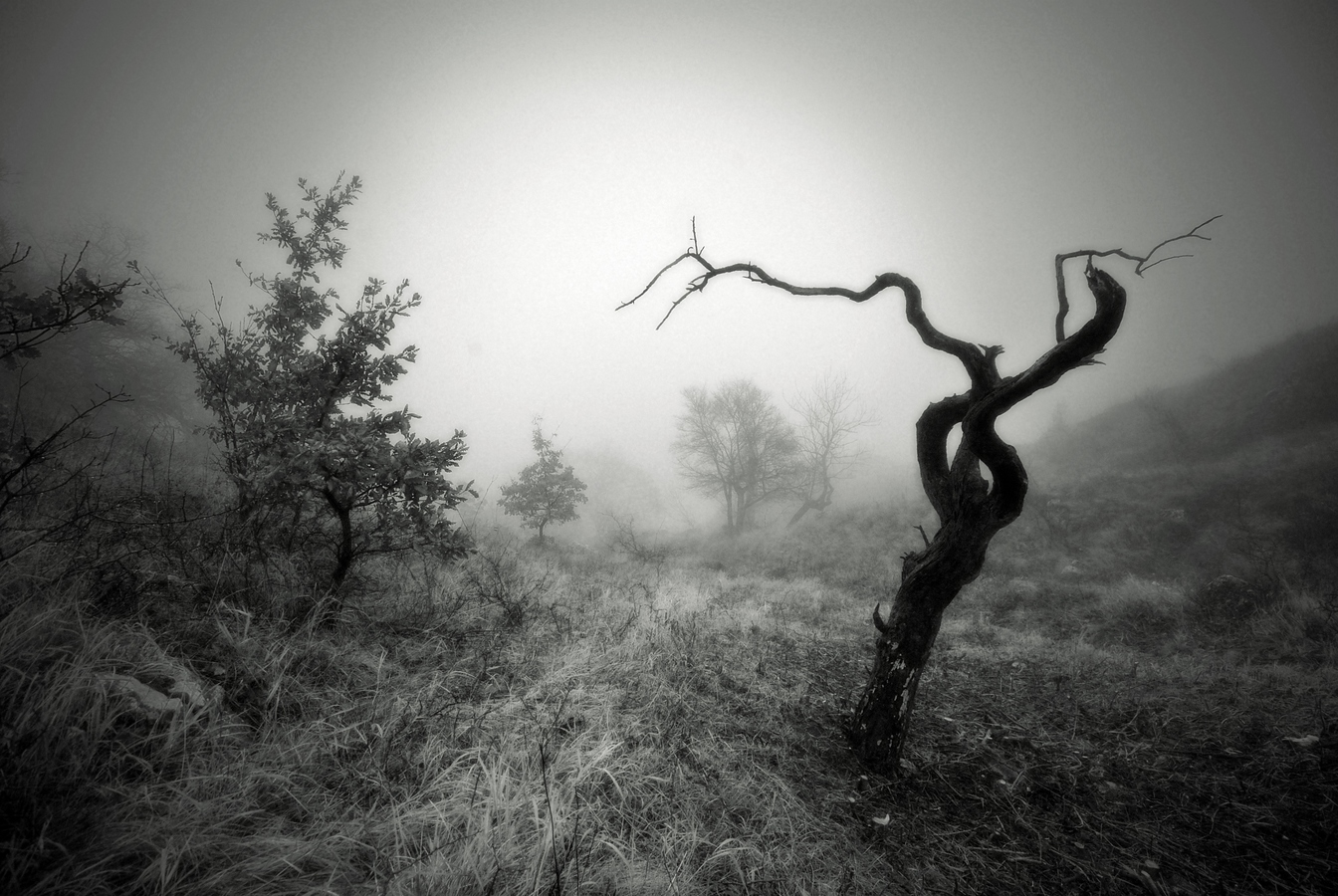 Pálavské stromy 7