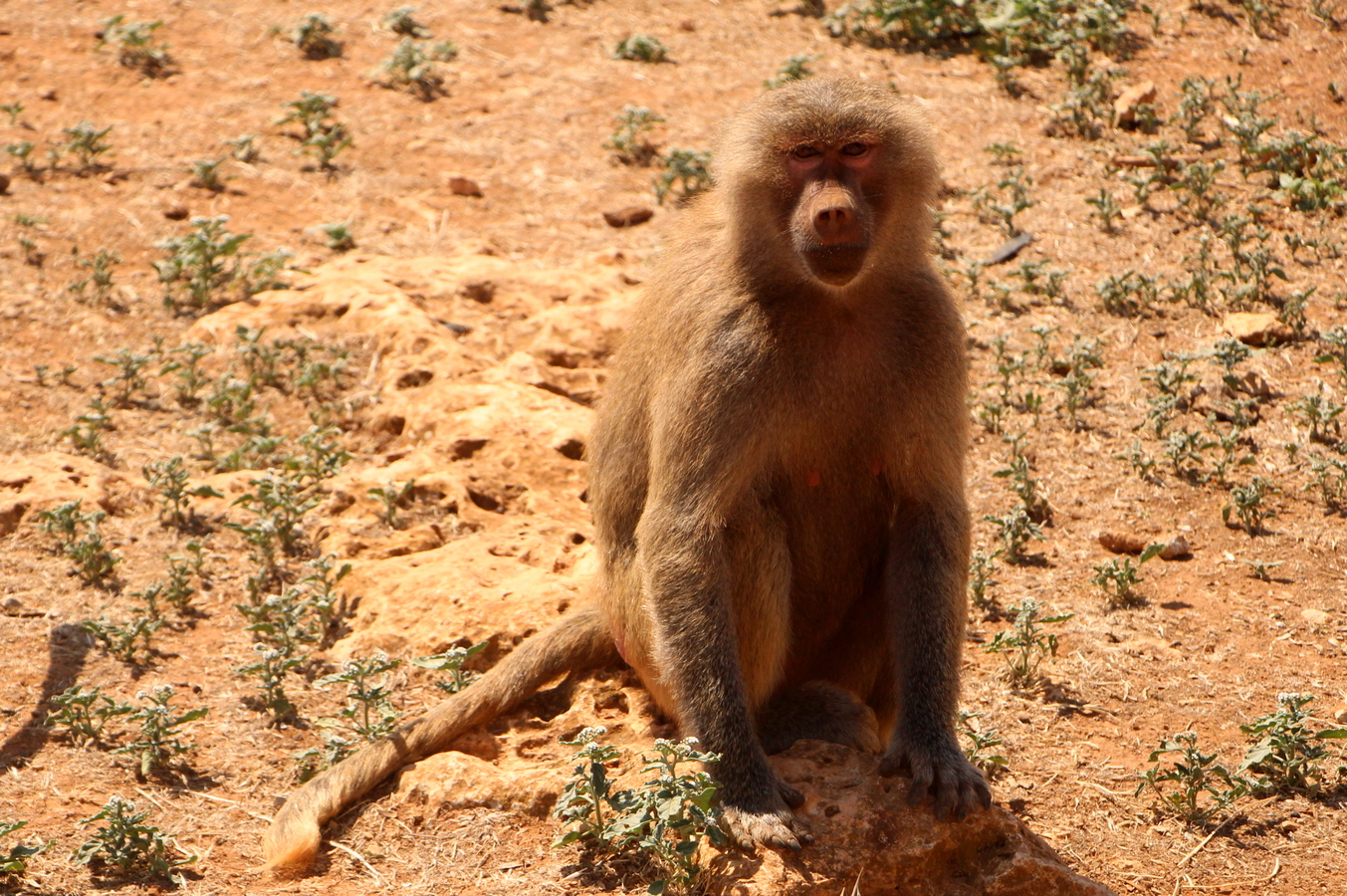 Tady je Opičákovo!