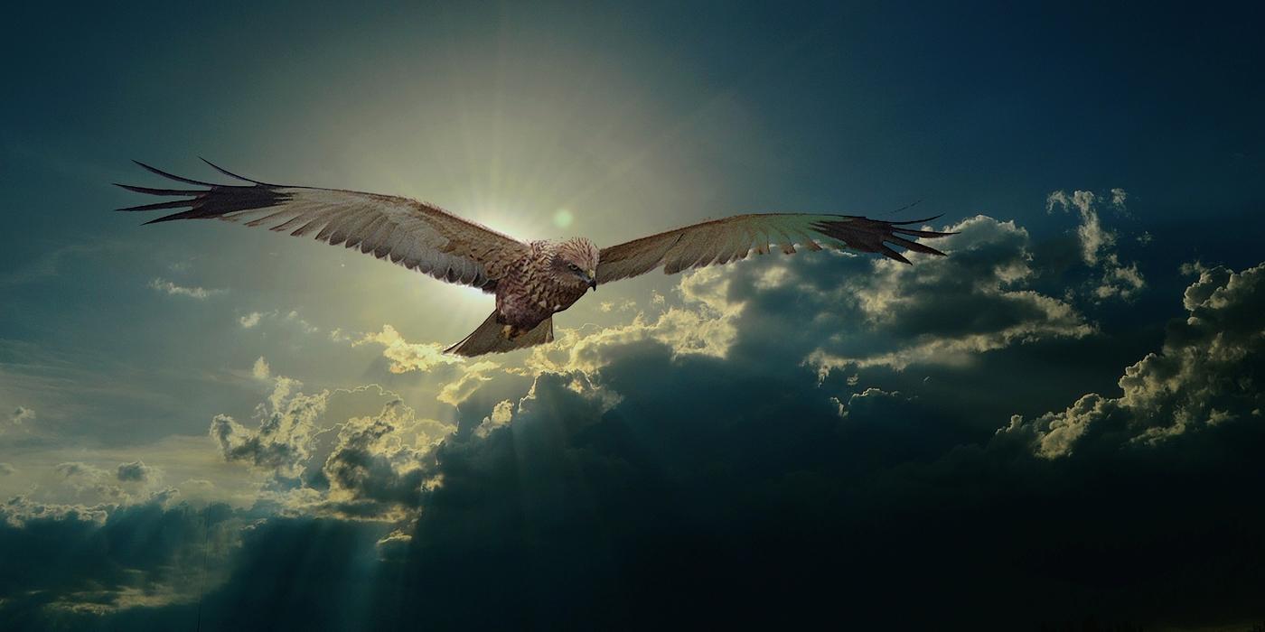 Let dravce před bouřkou